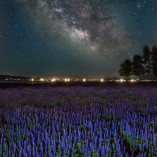 Lake Tahoe wildflower lupines and Milkyway