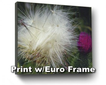 Metal Print with Frame