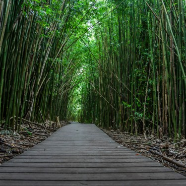 Hawaii Bamboo walkway_small