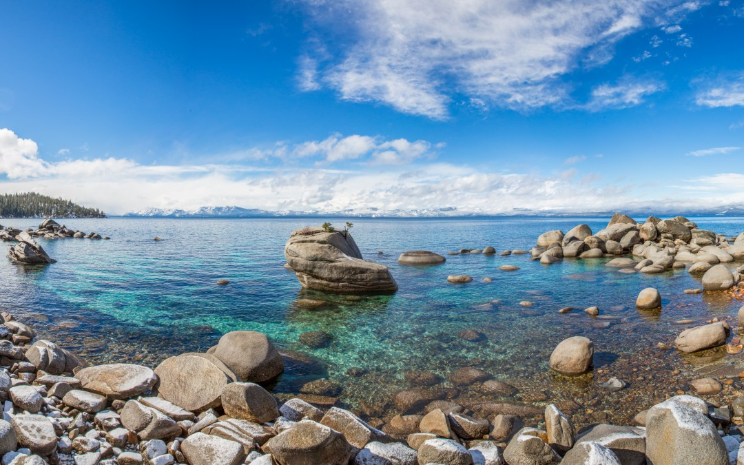 Bonsai Rock – Printable Up To 6 Feet Wide